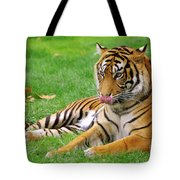 Tiger Tote Bag by Carlos Caetano