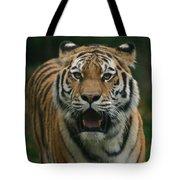 Tiger Tote Bag by David Rucker