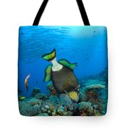 Titan Triggerfish Picking At Coral Tote Bag by Steve Jones