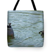 Two ducks diving Tote Bag by Matthias Hauser