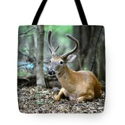 Velvet Buck At Rest  Tote Bag by Paul Ward