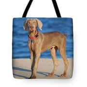 What - Weimaraner Puppy Tote Bag by Angie Tirado