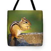 Wild Chipmunk  Tote Bag by Elena Elisseeva