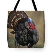 Wild Turkey Male North America Tote Bag by Tim Fitzharris