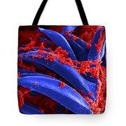 Yersinia Pestis Bacteria Sem Tote Bag by Science Source