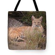 Bobcat At Rest Tote Bag by Alan Toepfer