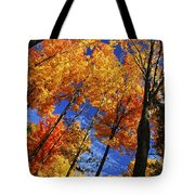 Autumn Forest Tote Bag by Elena Elisseeva