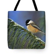 Black-capped Chickadee Tote Bag by Tony Beck