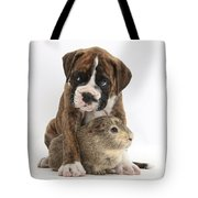 Boxer Puppy And Guinea Pig Tote Bag by Mark Taylor