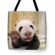 Giant Panda Ailuropoda Melanoleuca Cub Tote Bag by Katherine Feng