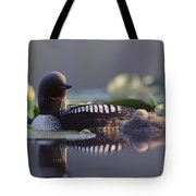 Pacific Loon Gavia Pacifica Parent Tote Bag by Michael Quinton