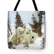 Polar Bear Ursus Maritimus Trio Tote Bag by Matthias Breiter