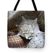 Seashells Tote Bag by Frank Tschakert