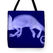 Veiled Chameleon X-ray Tote Bag by Ted Kinsman