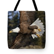 Bald Eagle Tote Bag by John Hyde - Printscapes