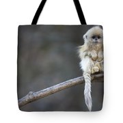 Golden Snub-nosed Monkey Rhinopithecus Tote Bag by Cyril Ruoso
