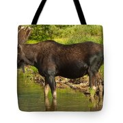 Moose Tote Bag by Sebastian Musial