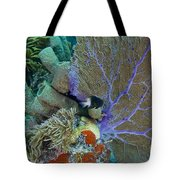 A Bi-color Damselfish Amongst The Coral Tote Bag by Terry Moore