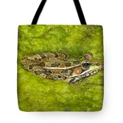 A Rio Grande Leopard Frog Sitting On A Tote Bag by Jack Goldfarb