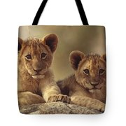 African Lion Cubs Resting On A Rock Tote Bag by Tim Fitzharris