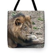 African Lion Tote Bag by Tom Mc Nemar