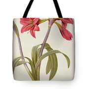 Amaryllis Brasiliensis Tote Bag by Pierre Redoute