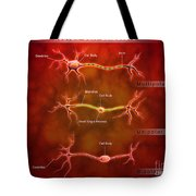 Anatomy Structure Of Neurons Tote Bag by Stocktrek Images
