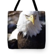 Bald Eagle 1 Tote Bag by Marty Koch