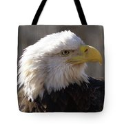 Bald Eagle 3 Tote Bag by Marty Koch