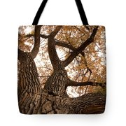Big Tree Tote Bag by James BO  Insogna