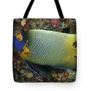 Blue Face Angelfish Tote Bag by Steve Rosenberg - Printscapes