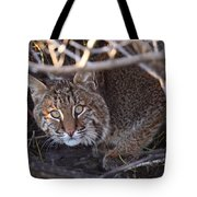 Bobcat Tote Bag by Bruce J Robinson