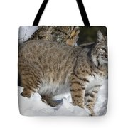 Bobcat Lynx Rufus In The Snow Tote Bag by Matthias Breiter