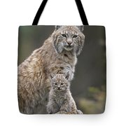 Bobcat Mother And Kitten North America Tote Bag by Tim Fitzharris