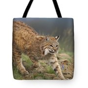 Bobcat Stalking North America Tote Bag by Tim Fitzharris