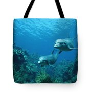 Bottlenose Dolphins And Coral Reef Tote Bag by Konrad Wothe