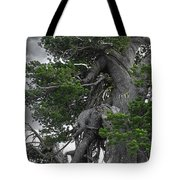 Bristlecone Pine tree on the rim of Crater Lake - Oregon Tote Bag by Christine Till