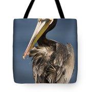 Brown Pelican Preening La Jolla Tote Bag by Sebastian Kennerknecht