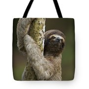 Brown-throated Three-toed Sloth Tote Bag by Ingo Arndt