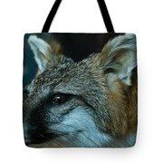 Canis Species Tote Bag by Douglas Barnett