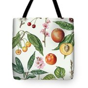Cherries And Other Fruit-bearing Trees  Tote Bag by Elizabeth Rice