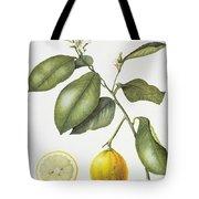 Citrus Bergamot Tote Bag by Margaret Ann Eden