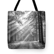 conifer forest in fog Tote Bag by Michal Boubin