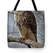 Cooper's Hawk 2 Tote Bag by Joe Faherty
