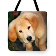 Curious Golden Retriever Pup Tote Bag by Christina Rollo