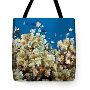 Damselfish Among Coral Tote Bag by Dave Fleetham - Printscapes