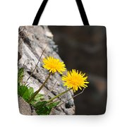 Dandelion Tote Bag by Catherine Reusch  Daley