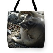 Elephant Seal Tote Bag by Ernie Echols