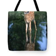 Fawn Reflection Tote Bag by Sandra Bronstein