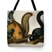 Fox Squirrel Tote Bag by John James Audubon